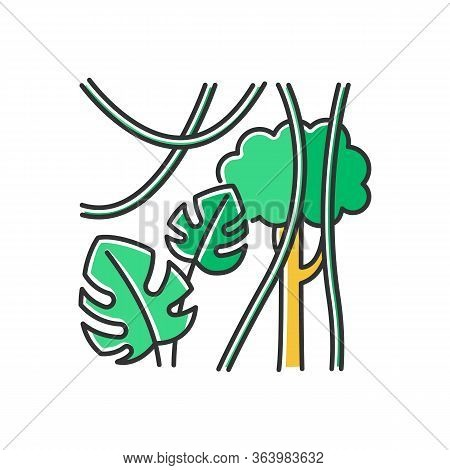 Rainforest Plants Color Icon. Evergreen Forest Vines. Swiss Cheese Plant And Lianas. Trip To Indones