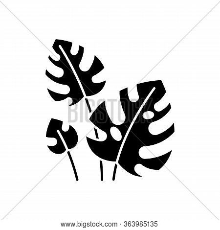Monstera Leaves Glyph Icon. Evergreen Tropical Forest Vines. Swiss Cheese Plant. Discovering Bali Na