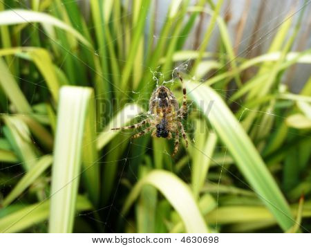 A big Spider on a spiders web. poster