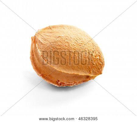 Apricot pip.