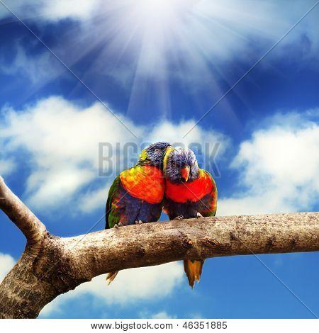 Pair of Rainbow Lorikeets
