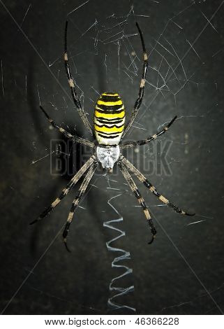Dreadful spider on the dark background.