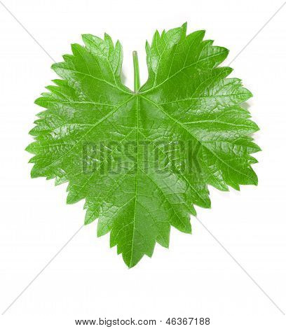 Grape leaf.