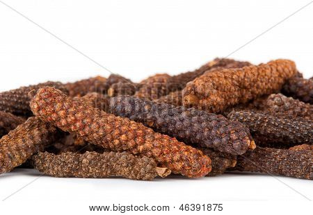 Long pepper or Piper longum on white background poster