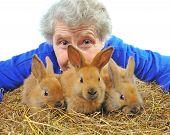elderly woman near nice rabbit. horizontal picture poster