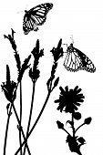 butterflies in  lavender meadow vector poster
