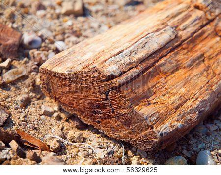 A Piece Of Petrified Wood