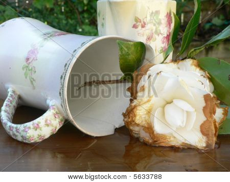 Antique Jugs and Decaying Flower