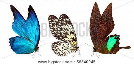 borboleta macro fundo