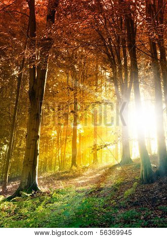 Abstract forest scene with sun