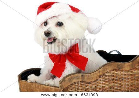 A Bichon Frise Christmas