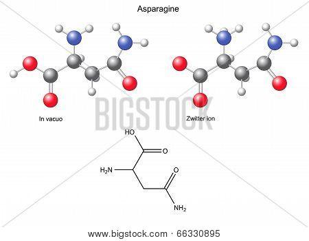 Asparagine (asn) - Chemical Structural Formula And Models