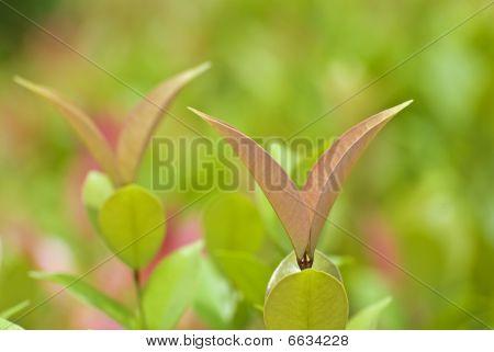Fresh leaves