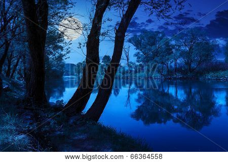 Forest River With Stones And Grass At Night