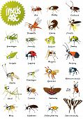 Insects ABC poster