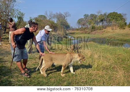 People walking with lions