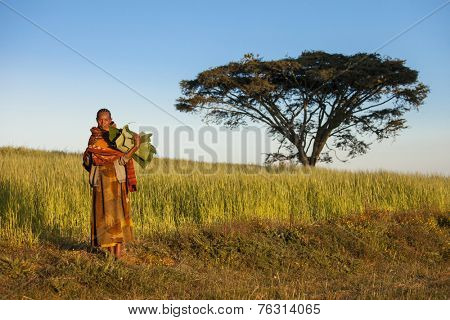 GOJO, ETHIOPIA-NOVEMBER 6, 2014: An unidentified woman carries banana leaves in the ethiopian countryside with a lone acacia tree behind her.