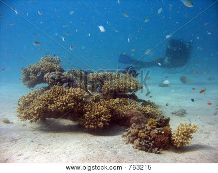 Small Coral Colony