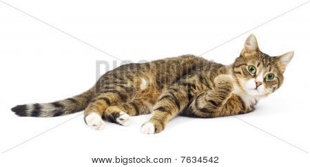 Cat lying. Surprised look. Round eyes. Isolated