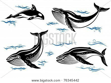 Cartoon sea whales