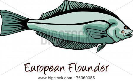 European Flounder or Platichthys flesus color iIllustration poster