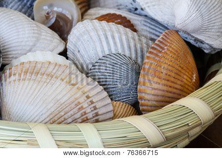 Shells In Sweatgrass Basket