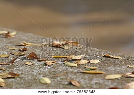 Wall In Fall With Deciduos Dried Leaves