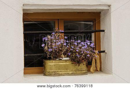 Window Flower