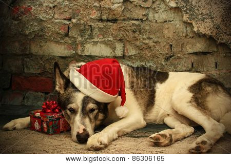 Sleeping Malamute Dog In A Santa Hat