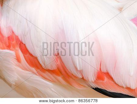Flamingo's Wing