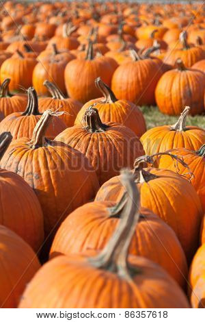 Pumpkins Waiting To Be Carved
