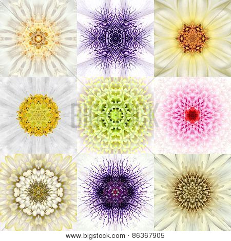 Collection Of Nine White Concentric Flower Mandalas. Concentric