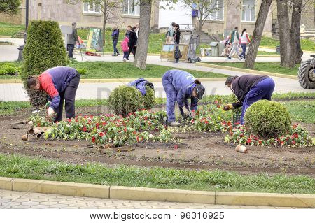 Kislovodsk. Work Of Workers Engage In Planting Flower