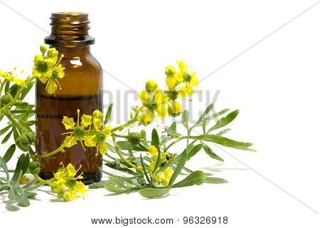 Rue Branch With Flowers And A Bottle Of Essential Oil Isolated On White