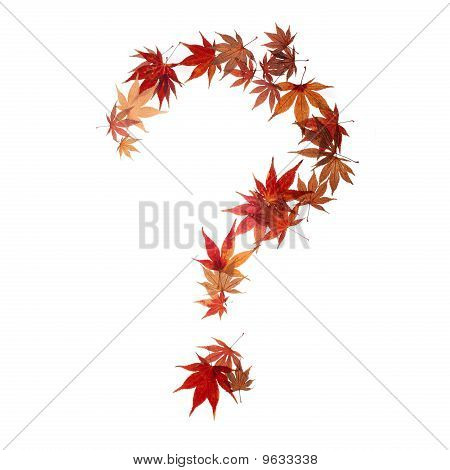 Question Mark Made By Maple Autumn Leaves