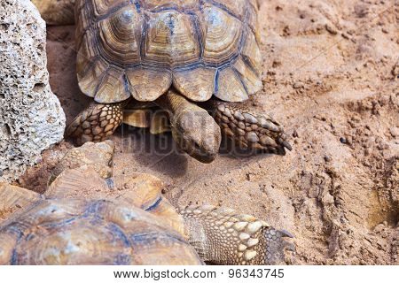 Big turtle in zoo - animal background