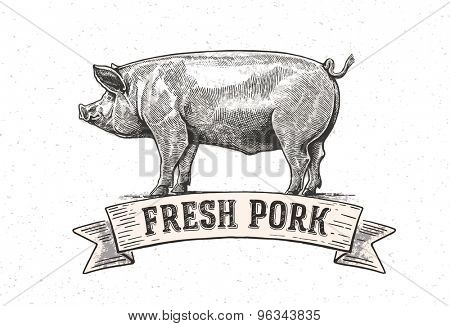 Graphic pig. Vector illustration drawn, by hand.