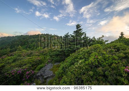 Roan Mountain Spring Rhododenron Blooms 9