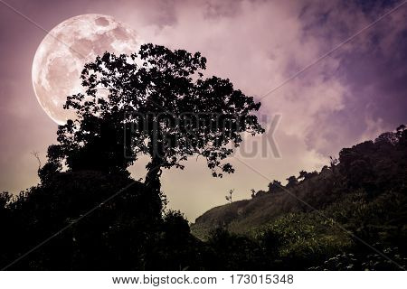 Silhouettes of tree with dark sky on tranquil nature background. Nighttime and super moon. Landscape in the evening full moon behind trees. Vintage effect tone. The moon were NOT furnished by NASA. poster