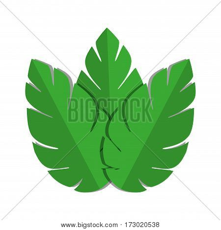 green leaves nature plant icon vector illustration