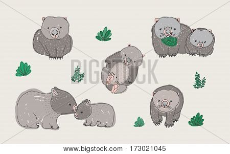 Set of cute young wombat in various poses. Hand drawn colorful vector illustration. Adult animal with cub.