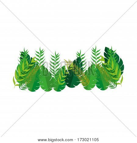 set collection diversity type leaves vector illustration