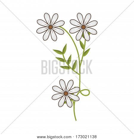plant with ramification and daisy flowers vector illustration
