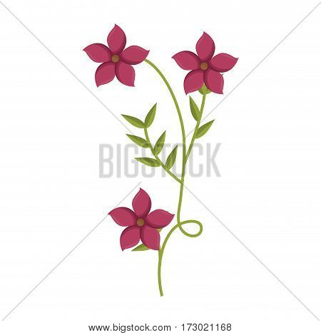 plant with ramification and pink flowers vector illustration