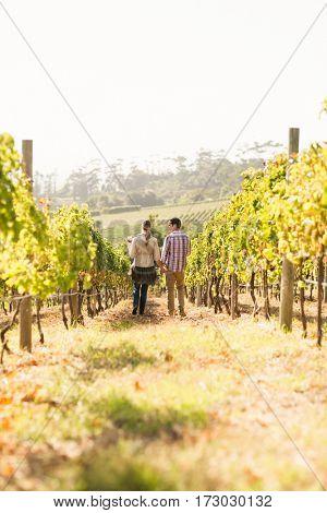 Couple walking through vineyard holding wine glasses