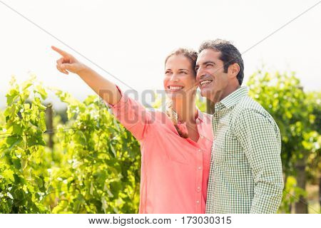 Happy couple standing in vineyard and pointing at nature on a sunny day