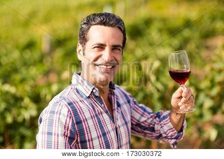Portrait of smiling male vintner holding a glass of wine in vineyard