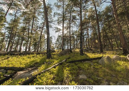 The forested area near Devils Tower in Wyoming.