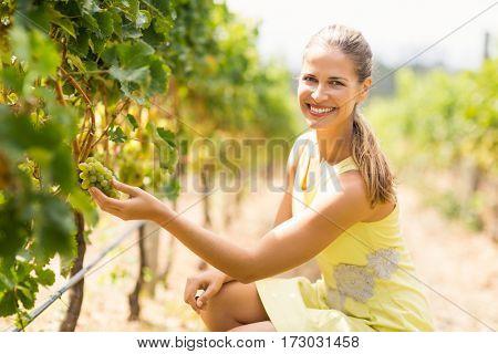 Portrait of smiling female vintner inspecting grapes in vineyard