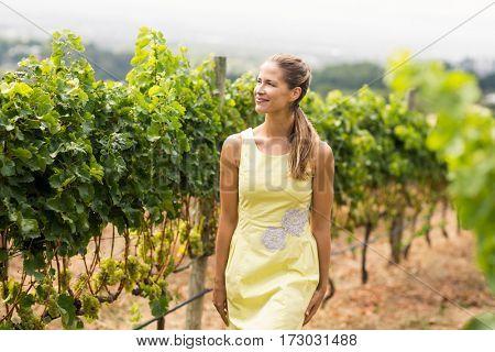 Smiling female vintner looking at grape crop in vineyard